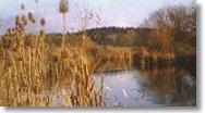 Ein Karpfenweiher im Herbst