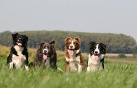Satzung zur Erhebung der Hundesteuer vom 25. November 2015