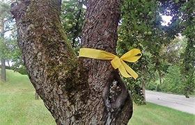Ein gelbes Band am Baumstamm heißt: Greif zu!
