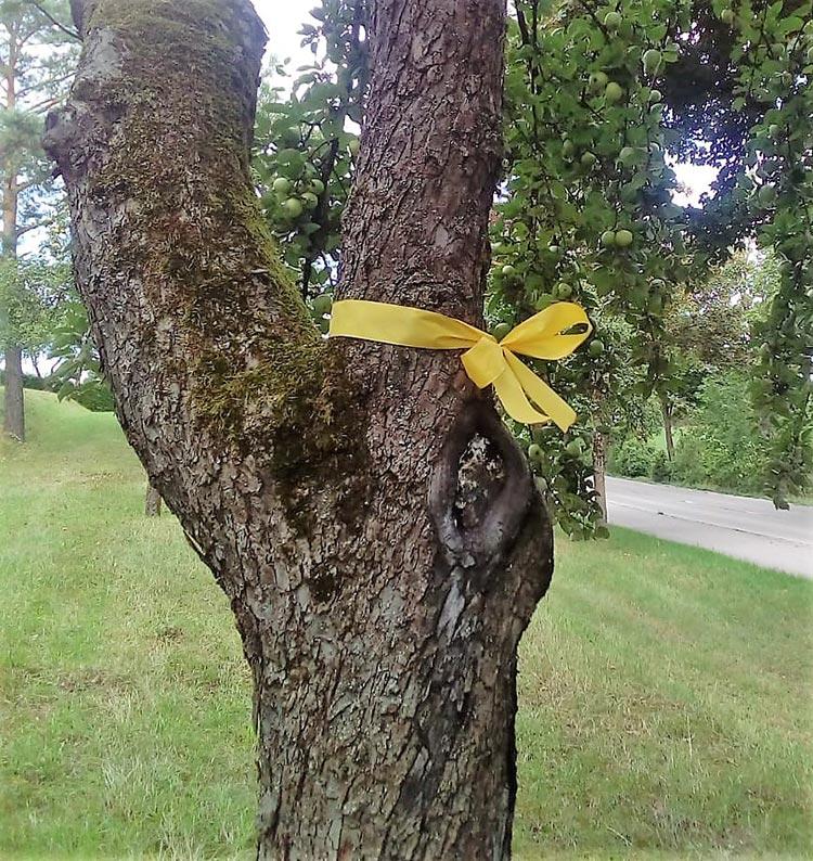 Baumstamm mit gelben Band
